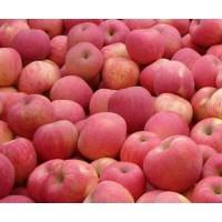 产地批发红富士苹果 山东红富士苹果价格 英瑞果蔬好吃 代收苹果运输
